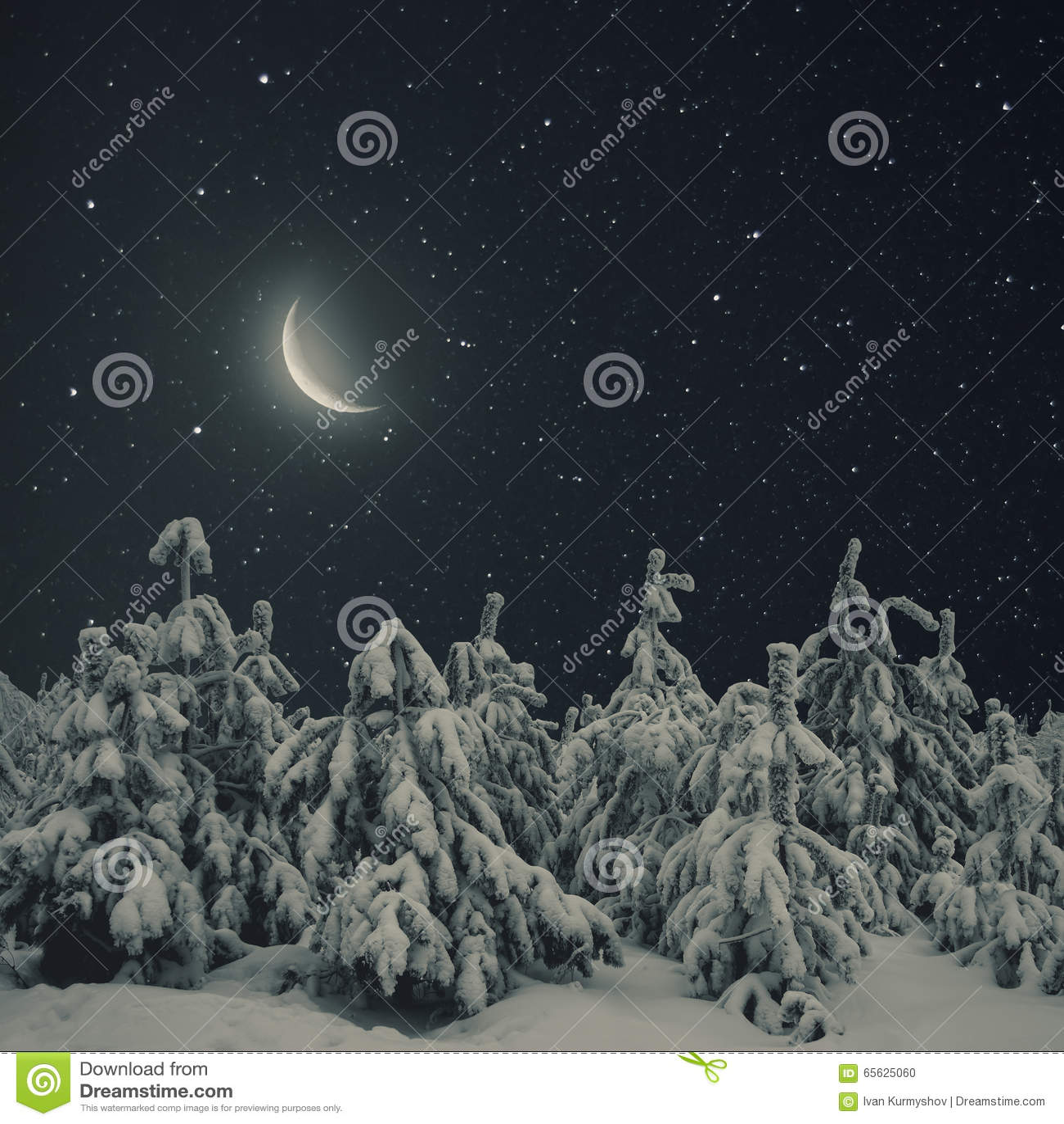 Beau paysage de nuit de nature d hiver Les pins ont couvert la neige