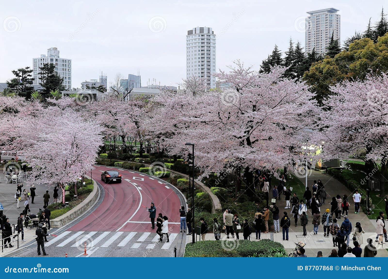 Beau paysage de Sakura Matsuri Festival dans Roppongi