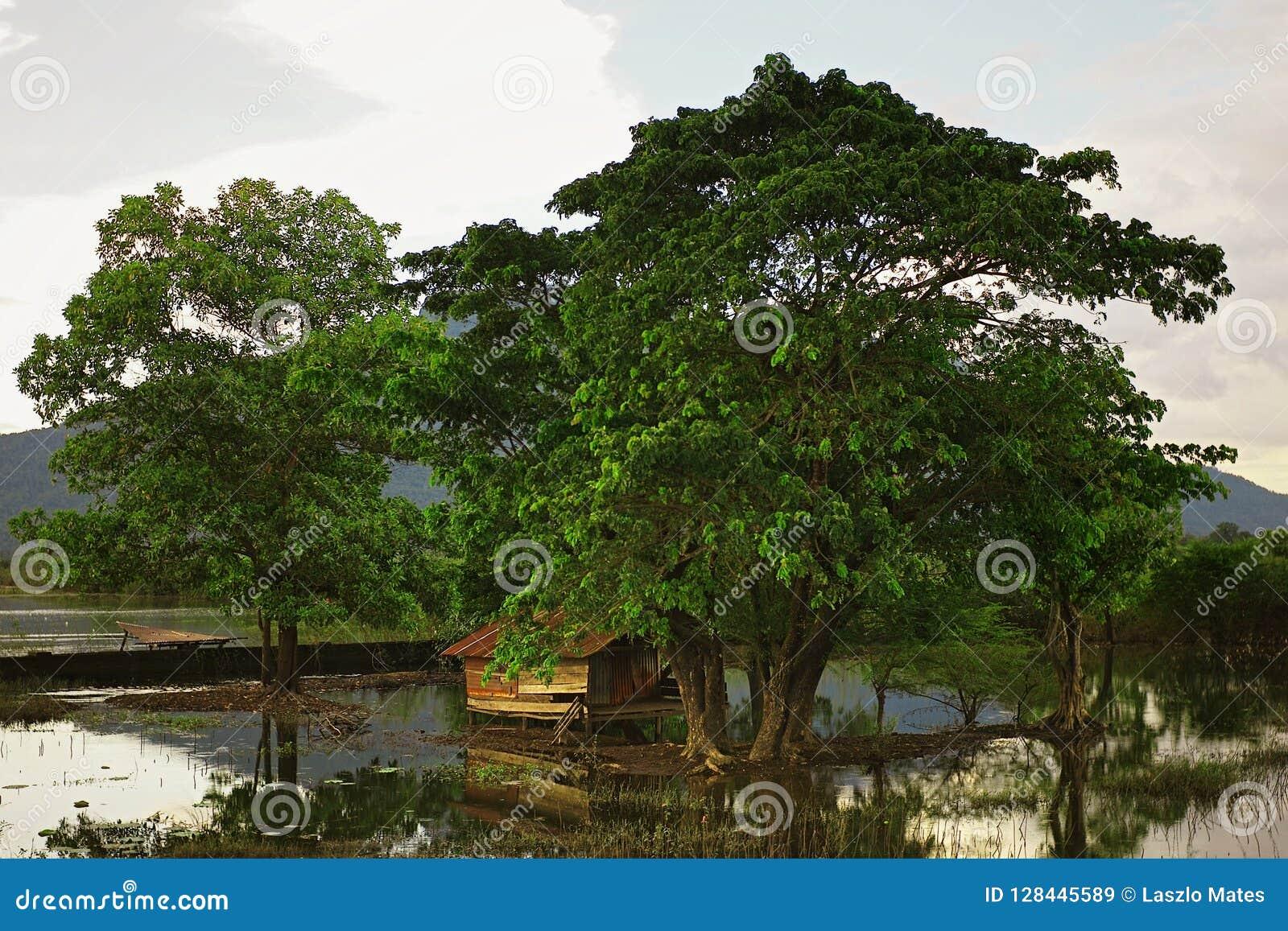Beau paysage des marais autour du village avec quelques grands arbres et une maison traditionnelle d échasse