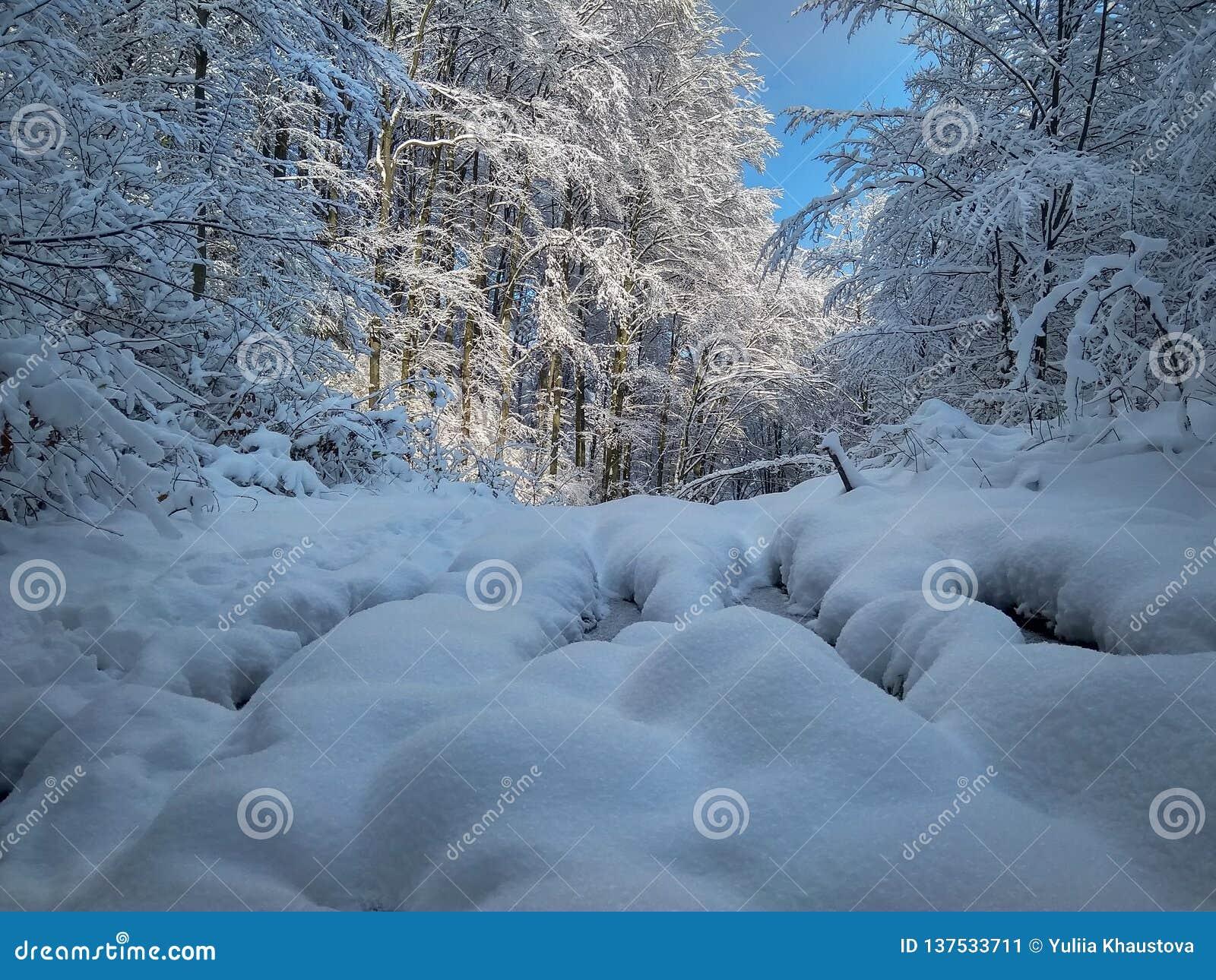Beau paysage ensoleillé d hiver dans la forêt