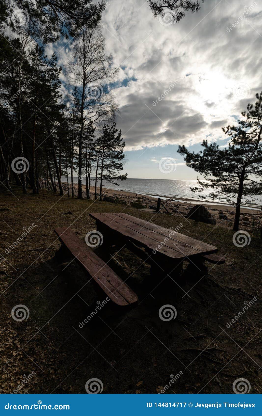 Beau pique-nique éloigné et tache campante près d une mer baltique dans une forêt de pin avec une plage de rocher à l arriè
