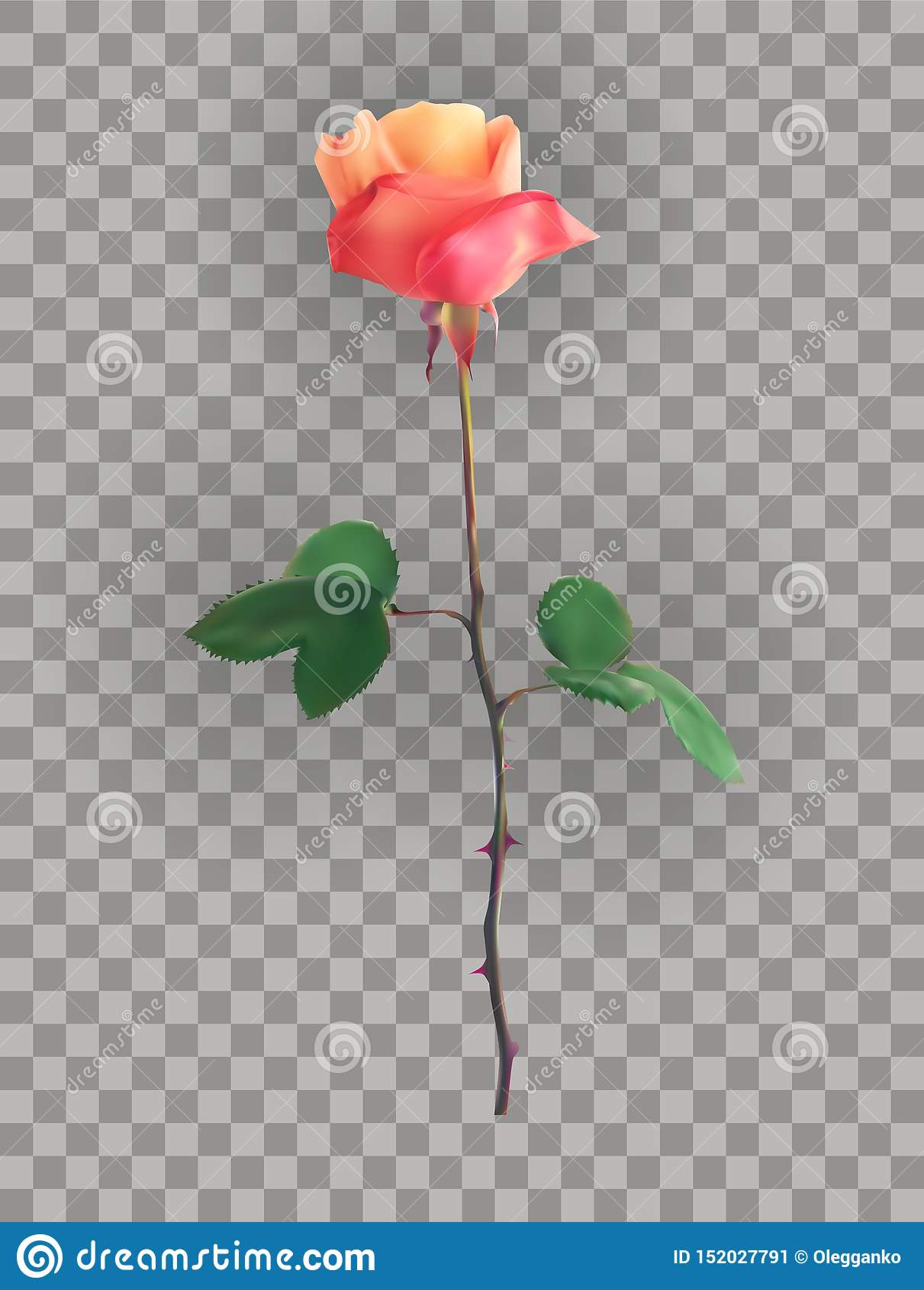 Beau rose Rose Stems sur un fond transparent Illustration de vecteur