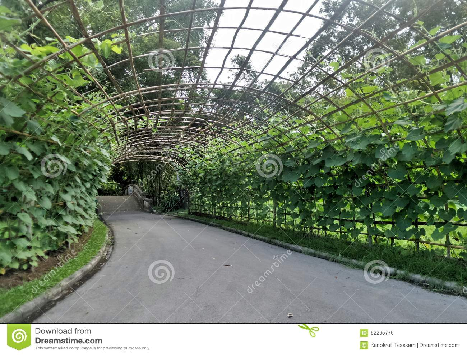 Beau tunnel vert de haricot de poteau