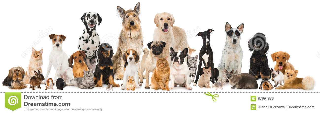 Beaucoup d animaux familiers