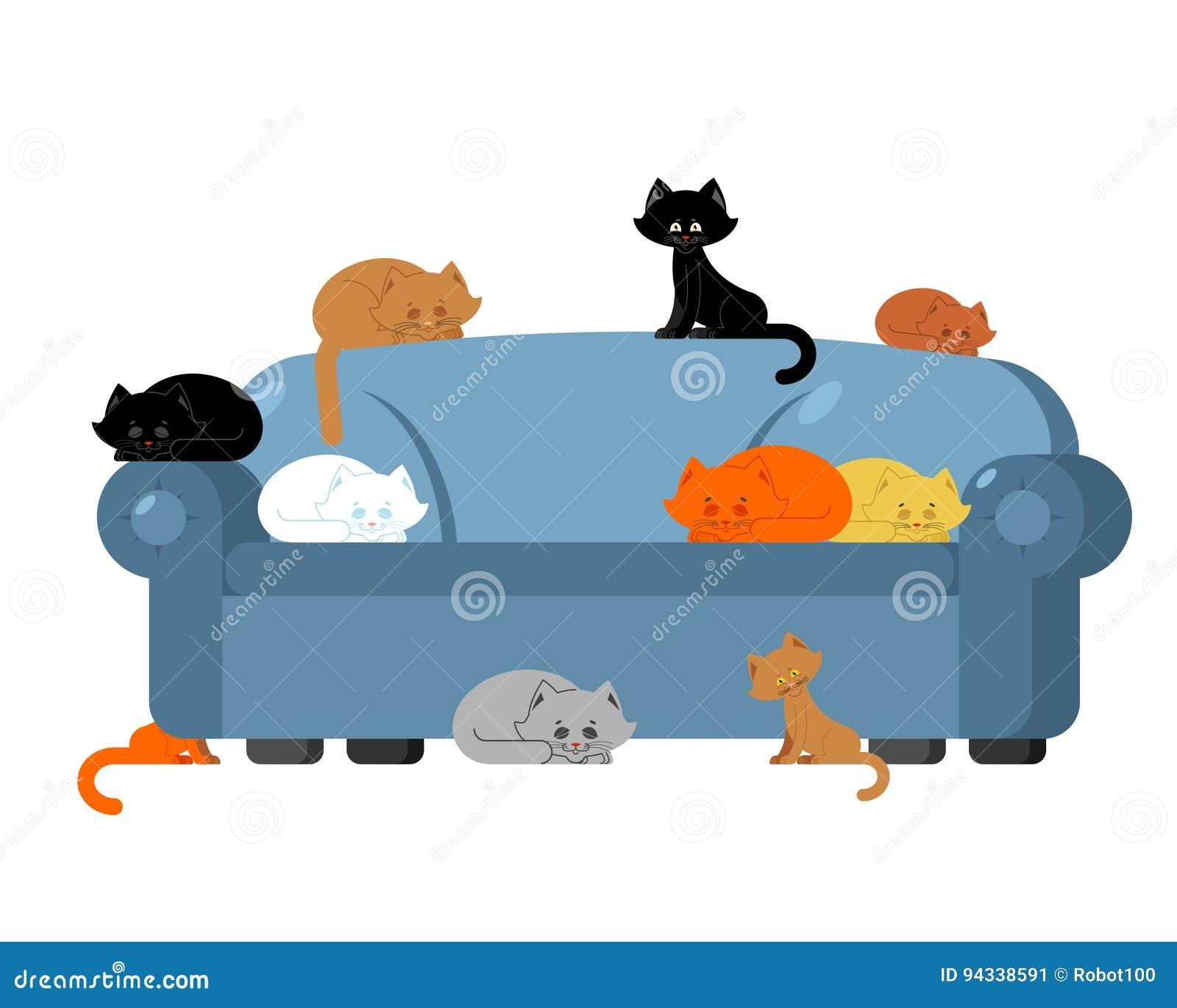 Beaucoup de chats sur le divan chatons sur le sofa Dame de chat de meubles