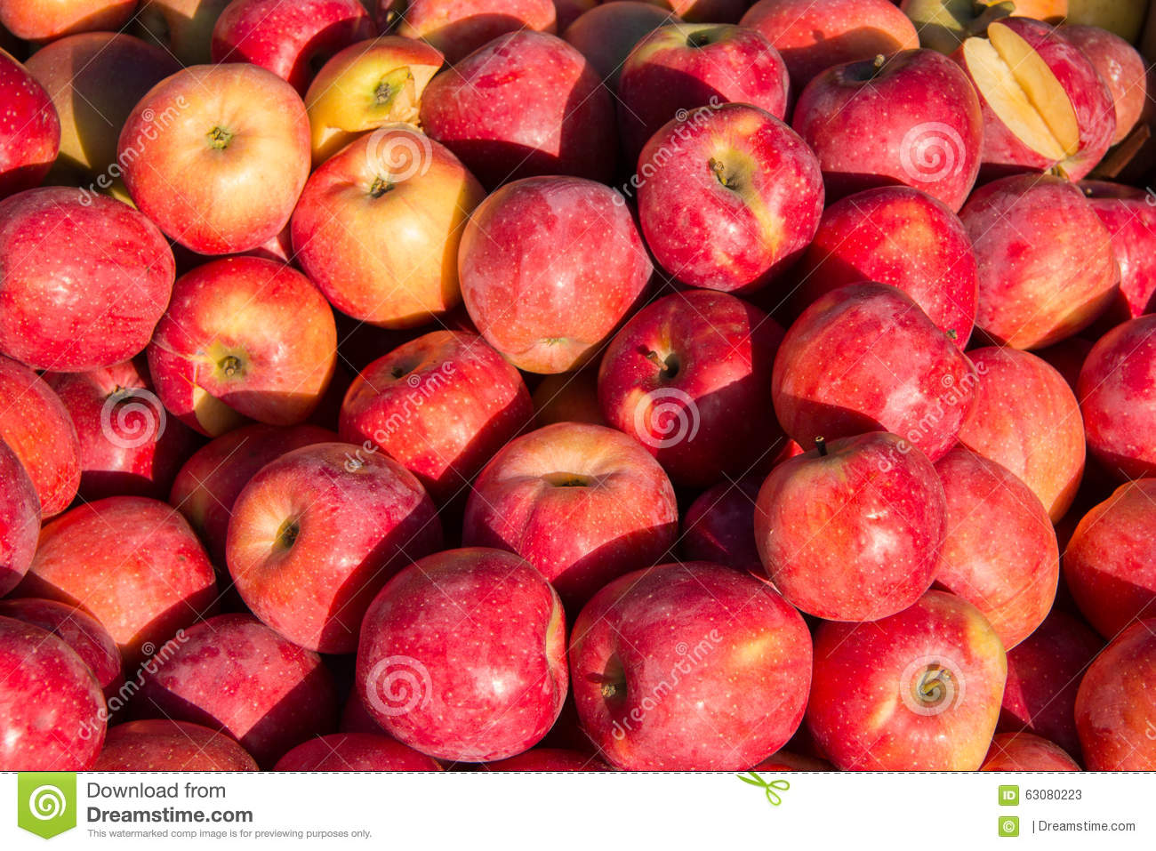 Download Beaucoup de kaki frais image stock. Image du coloré, manger - 63080223