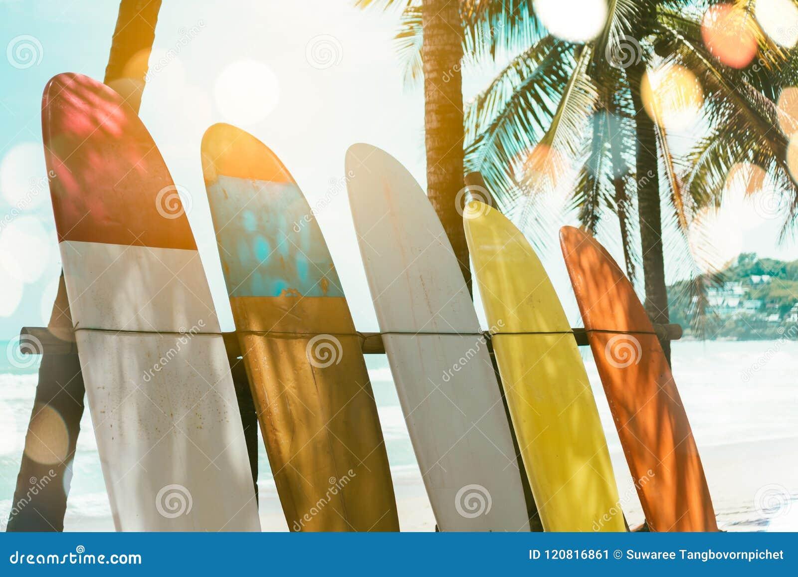 Beaucoup de planches de surf près des arbres de noix de coco
