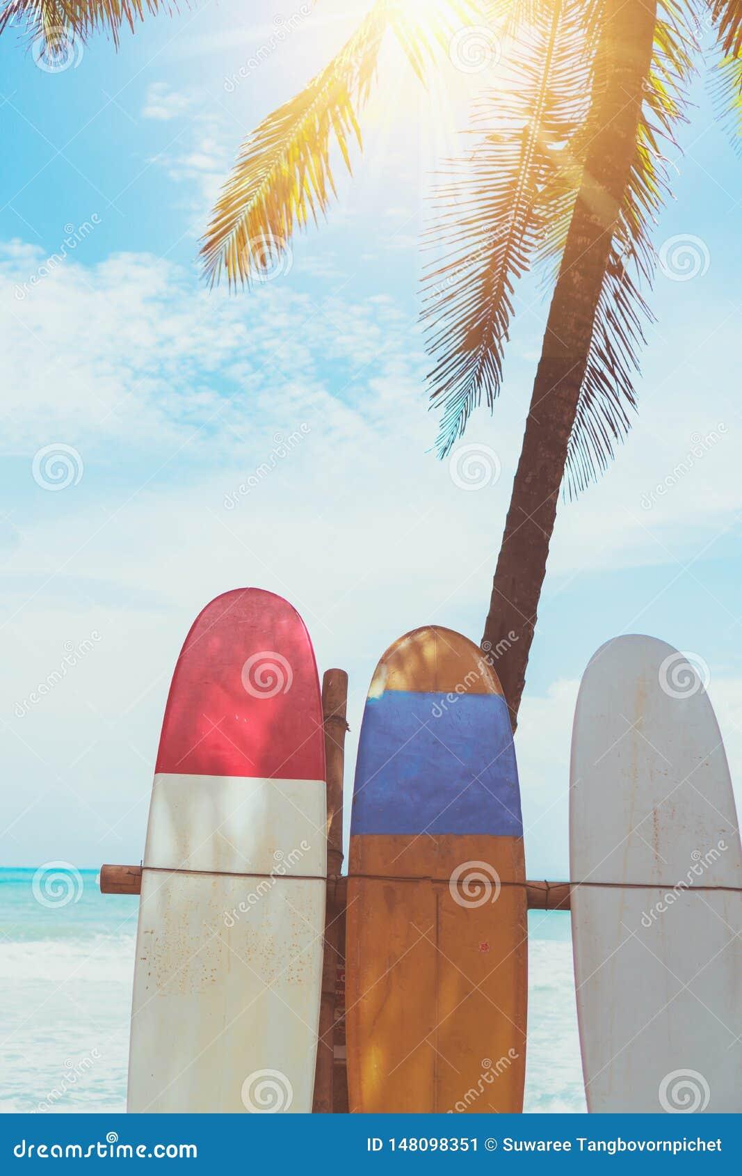 Beaucoup de planches de surf pr?s des arbres de noix de coco ? la plage d ?t? avec la lumi?re du soleil et le ciel bleu