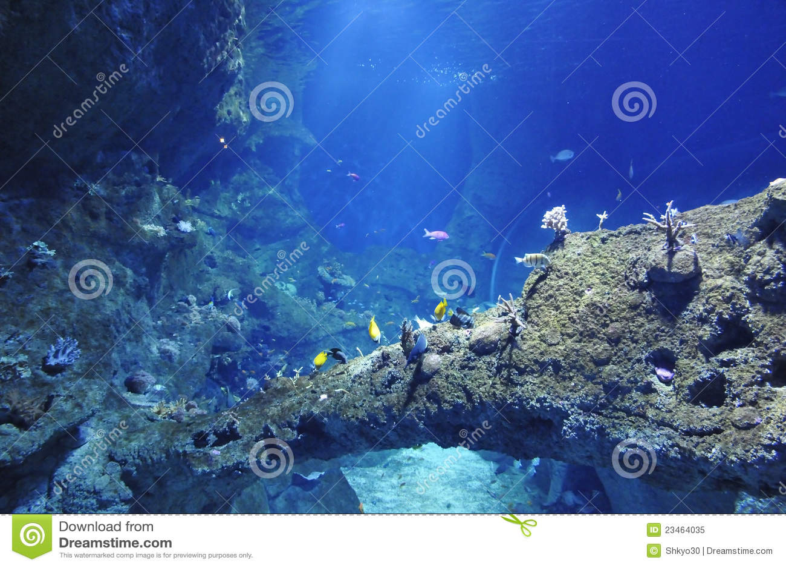 Beaucoup de poissons de mer dans un grand aquarium photo - Grand poisson de mer ...