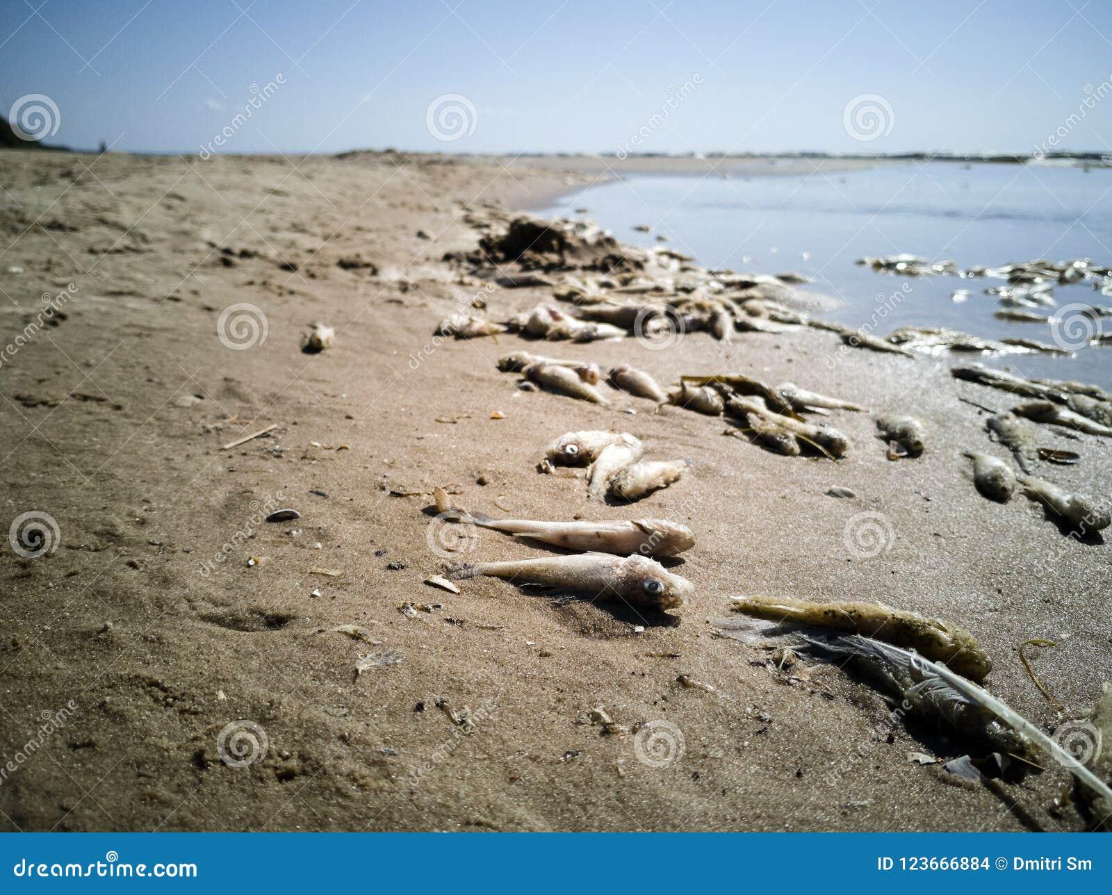 Beaucoup de poissons morts