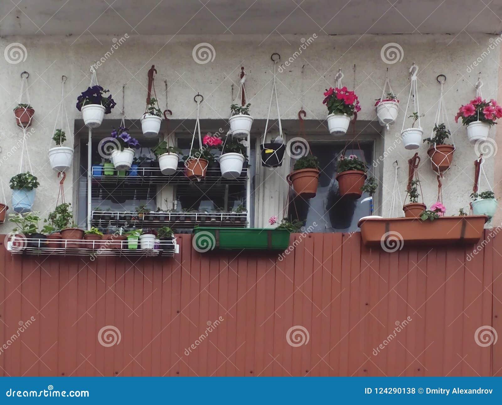 Beaucoup de pots de fleur sur la fenêtre des planteurs