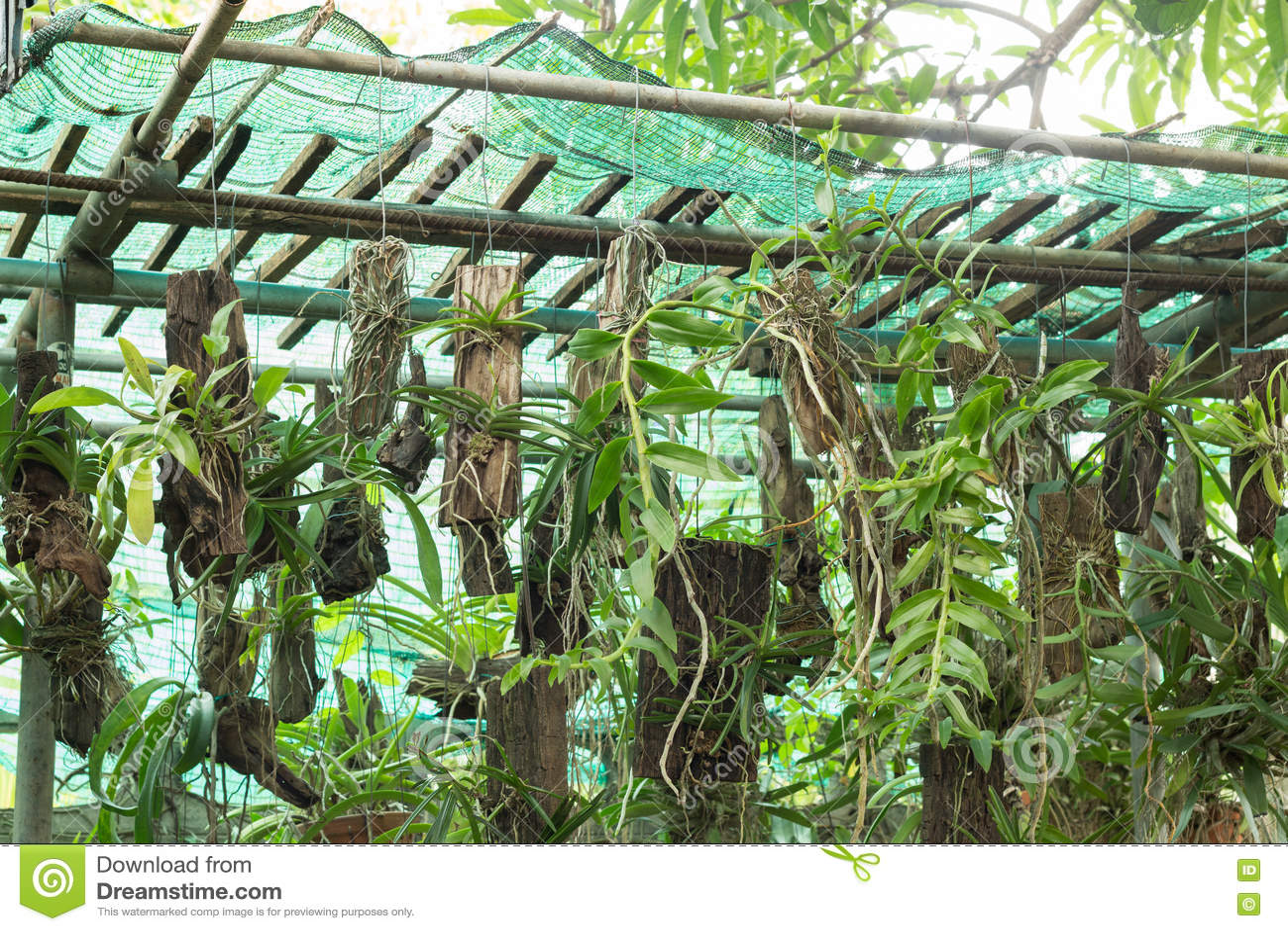 beaucoup type de fleurs d 39 orchid e photo stock image du floral vous 70774092. Black Bedroom Furniture Sets. Home Design Ideas
