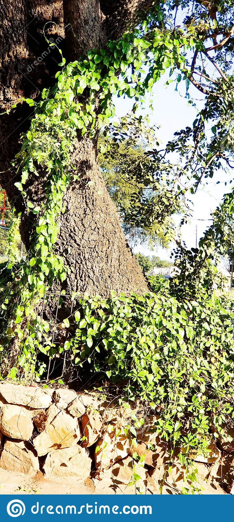 Beaut? verte de l arbre A de nature
