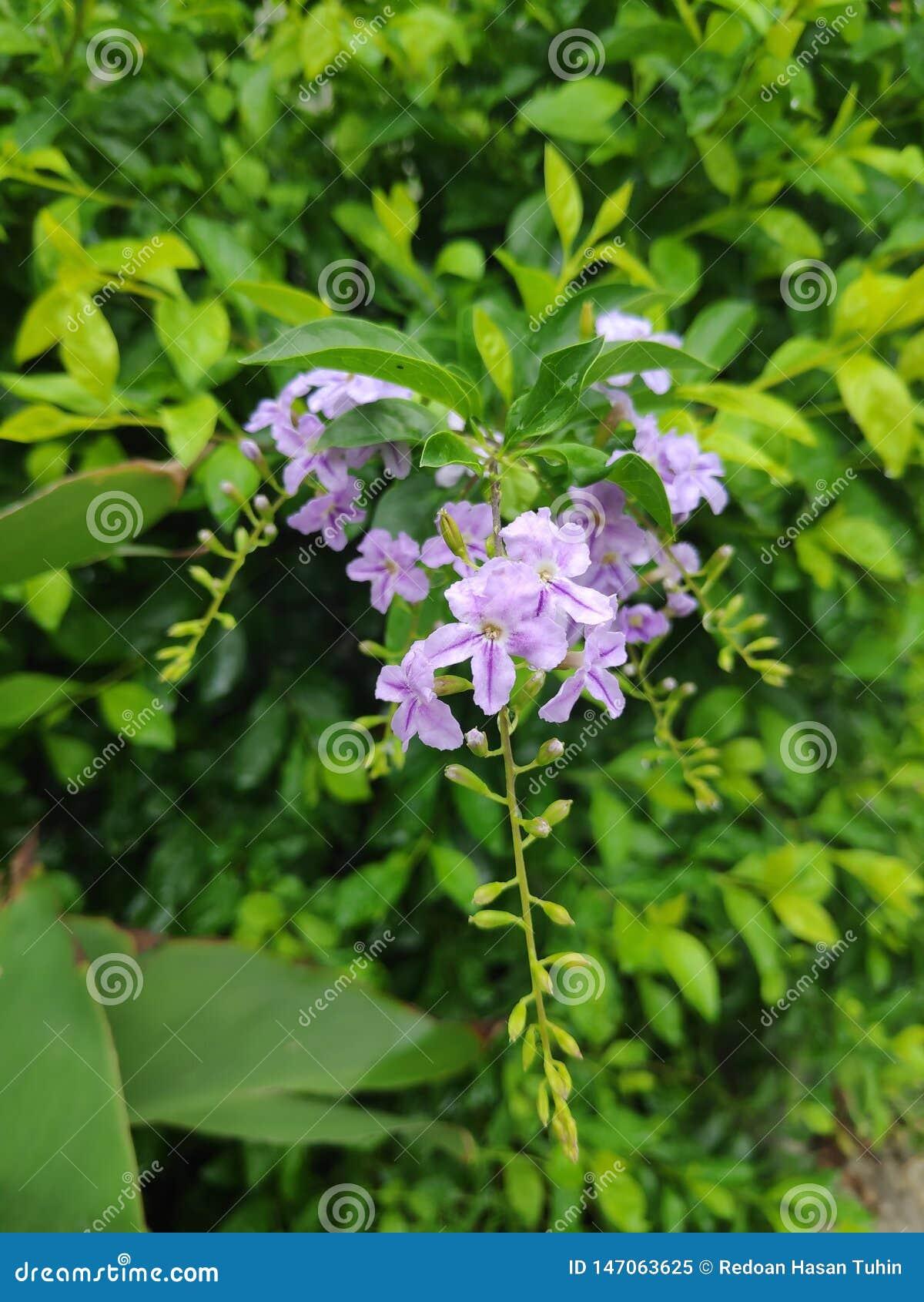 Beaut? naturelle des fleurs