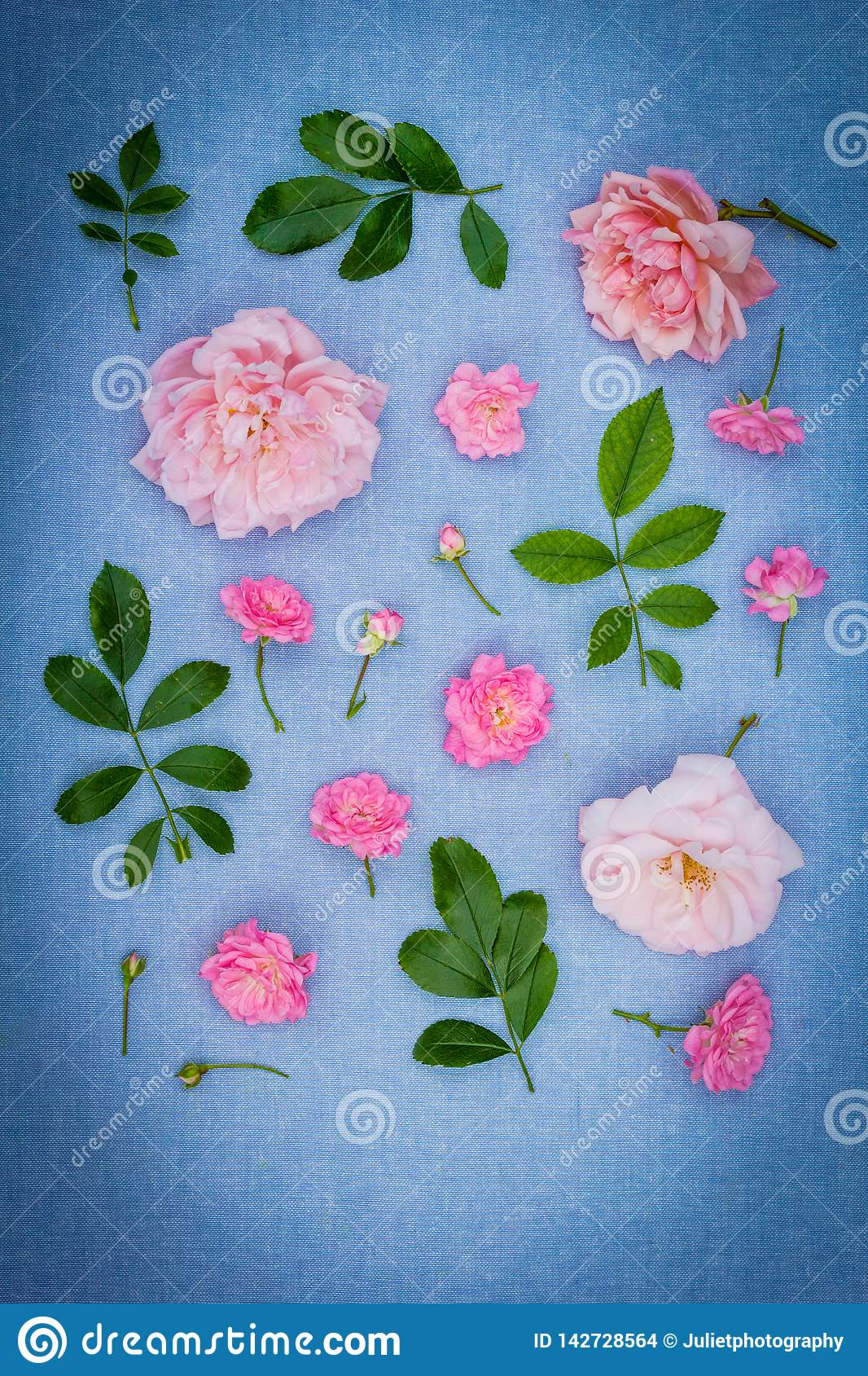 Beautifu, romantic, floral background with pink roses on blue, fabric background stock images