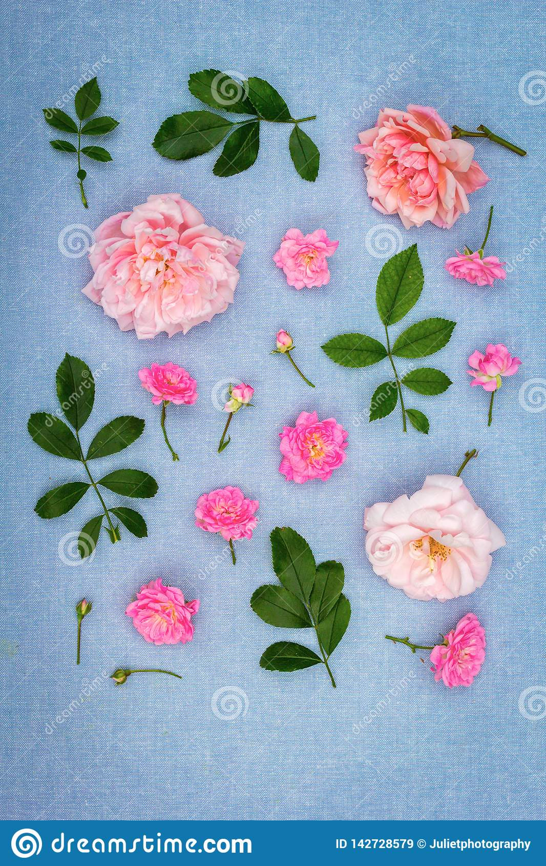 Beautifu, romantic, floral background with pink roses on blue, fabric background royalty free stock images