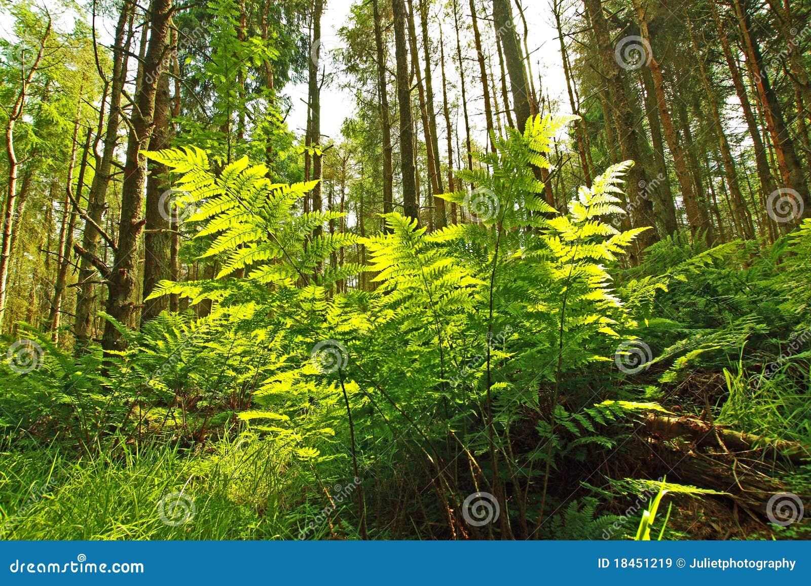 Beautifufl Spring forest