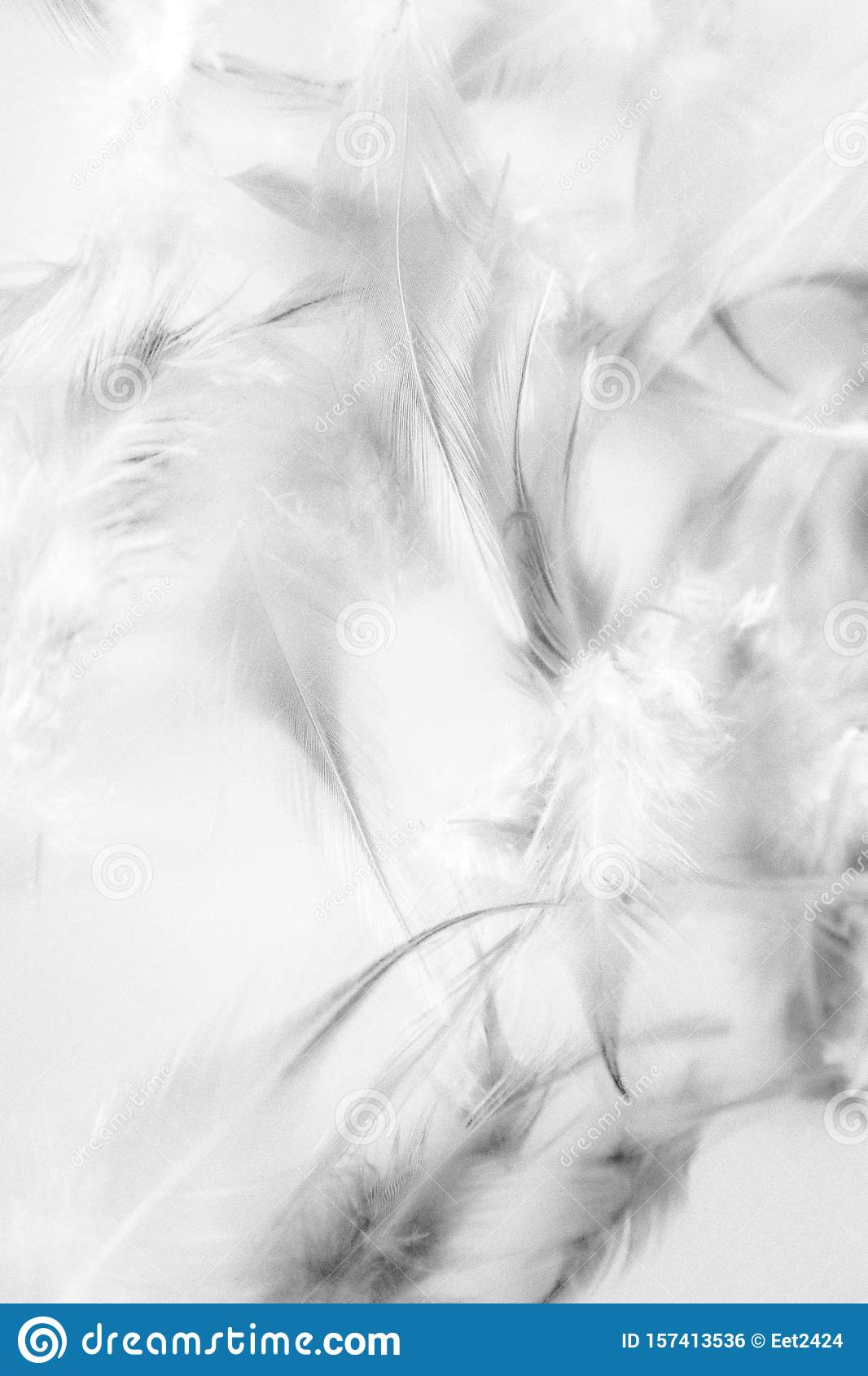 Beautiful Abstract Close Up Color Black And White Feathers Background And Wallpaper Stock Photo Image Of Dark Macro 157413536