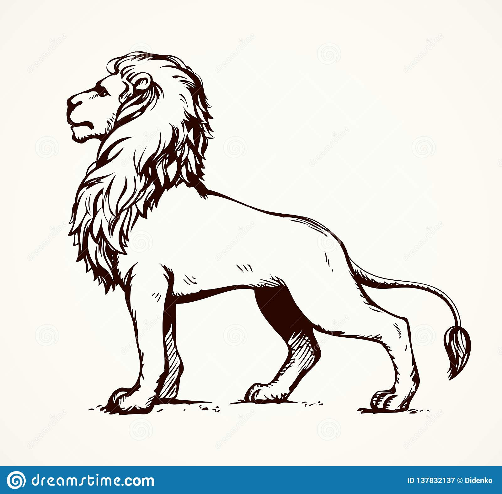 Lion Vector Drawing Stock Vector Illustration Of Africa 137832137 Thin line leo outline icon vector illustration. https www dreamstime com beautiful african proud powerful nobility big leo standing fierce looking prey freehand ink drawn background sketchy image137832137