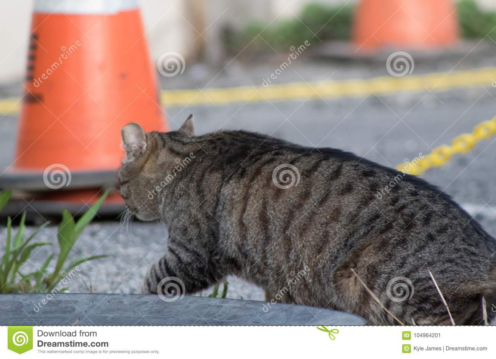 Alley Cat Walking