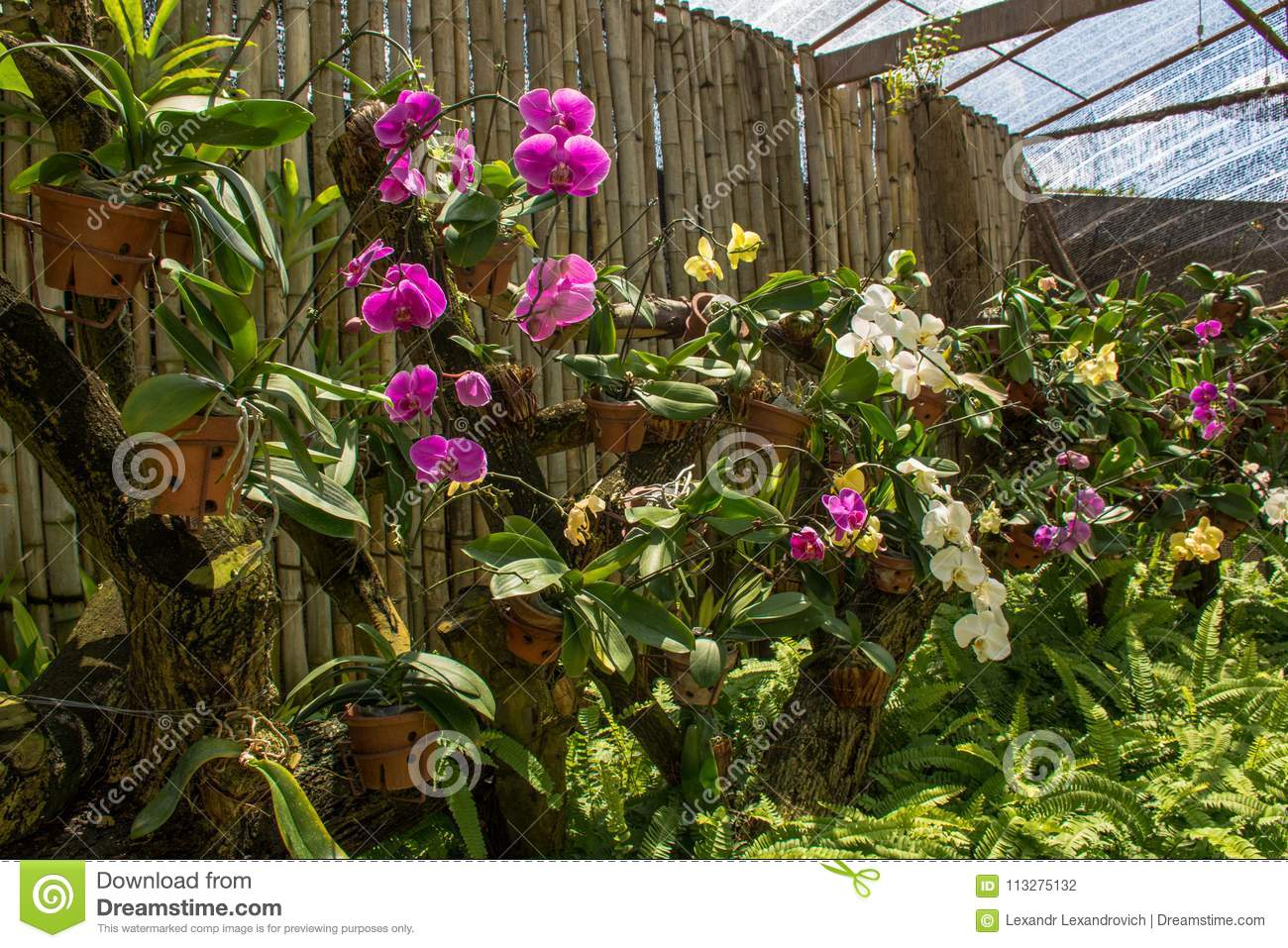 Beautiful Amazing Tropical Garden With Vibrant Colourful Orchid ...