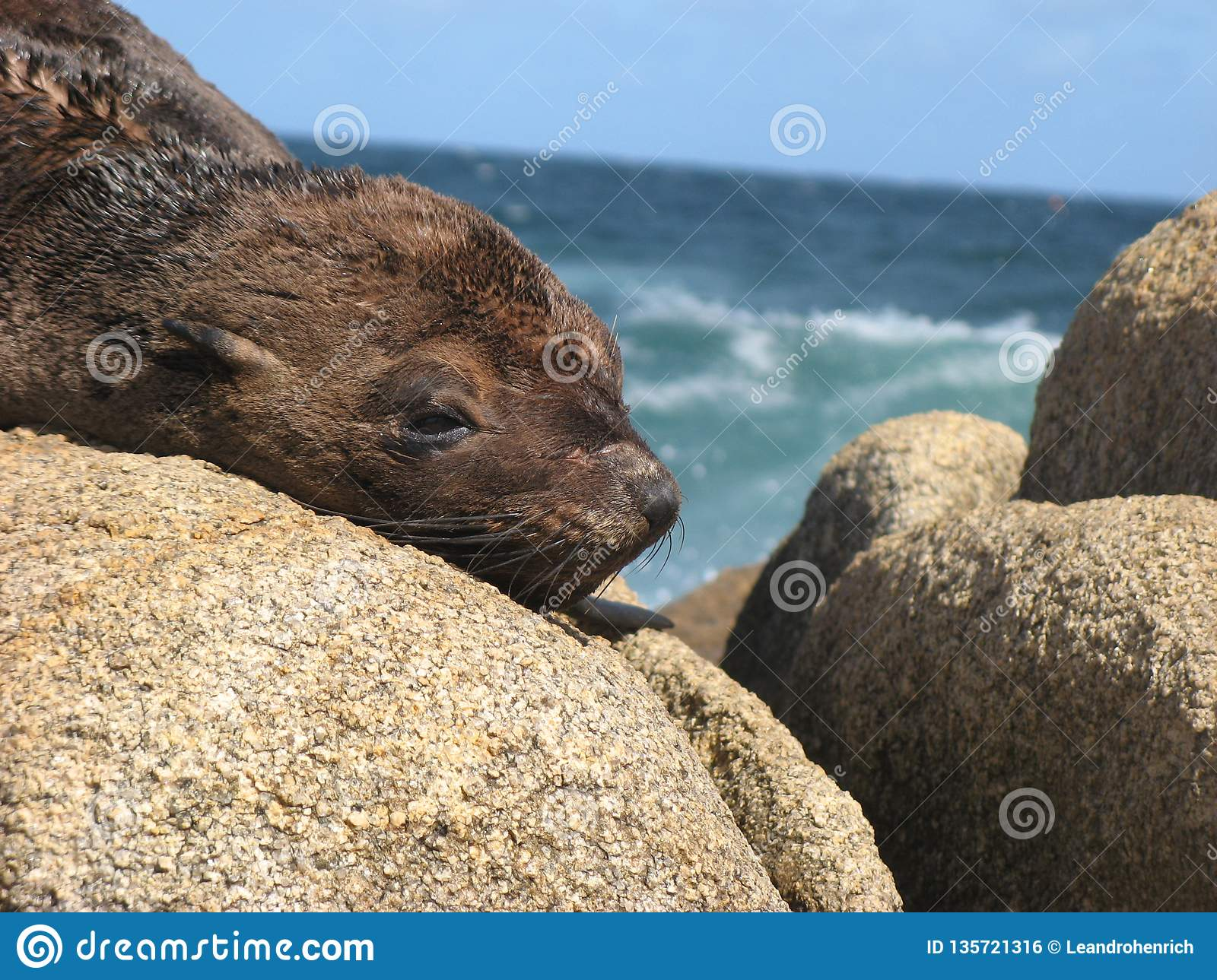 A baby seal resting on the rocks