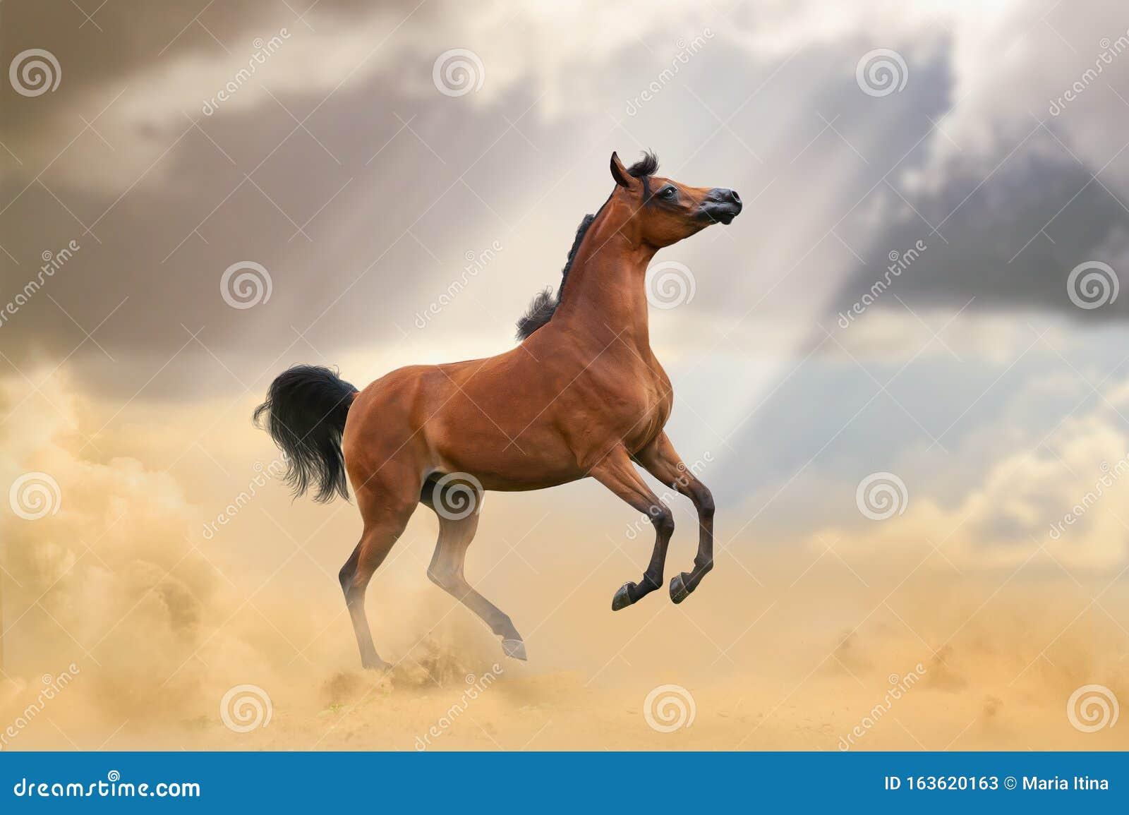 Beautiful Arabian Horse In Desert Stock Image Image Of Activity Fast 163620163