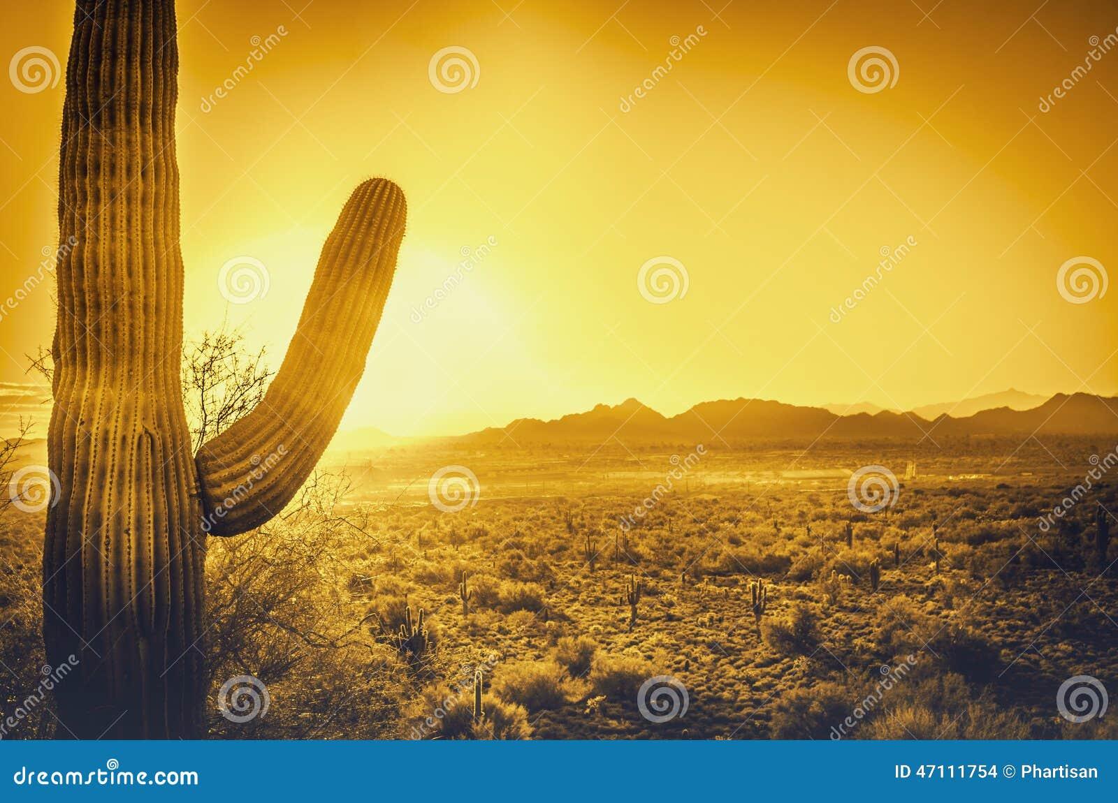 Beautiful Arizona desert sunset