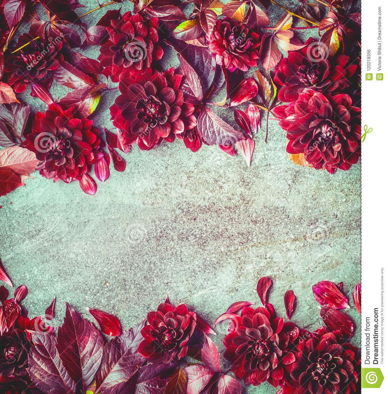 Beautiful Autumn Burgundy Flowers Background Top View Floral