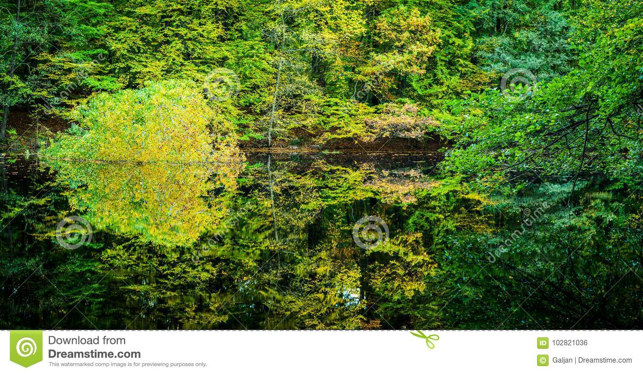Beautiful Autumn Colored Trees Reflected In A Small Forest Pond ...