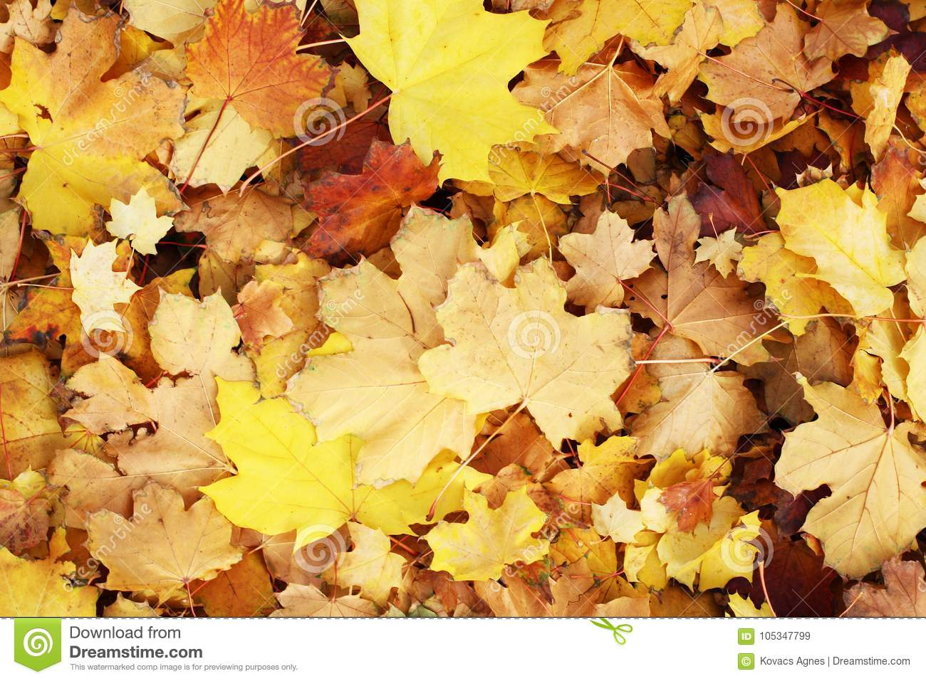 Beautiful Autumn Fall Leaf Leaves Texture Background Yellow Brown Vibrant Colorful Pattern Closeup Wallpaper