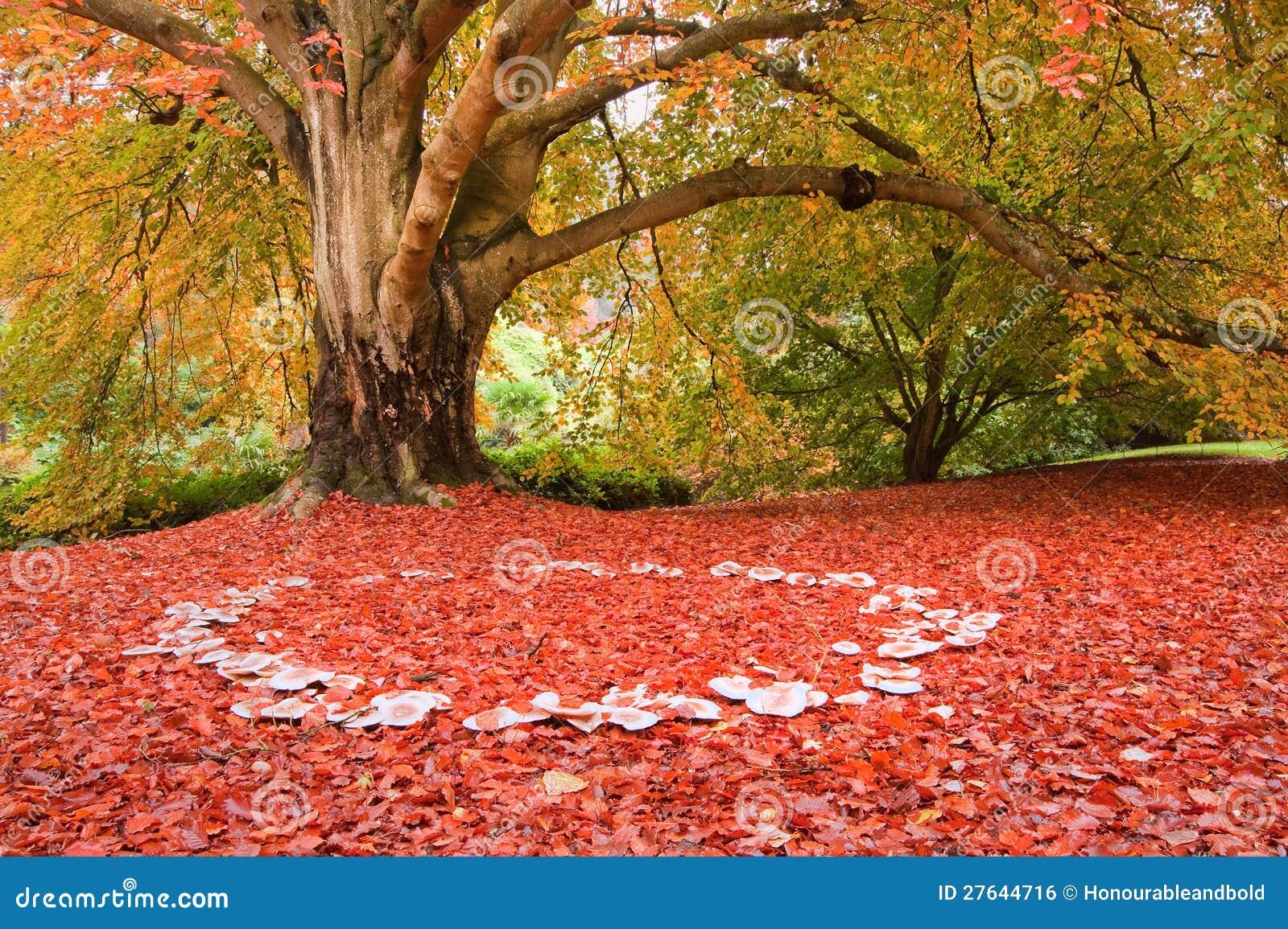 Beautiful Autumn Fall Nature Fairy Ring Mushrooms Stock