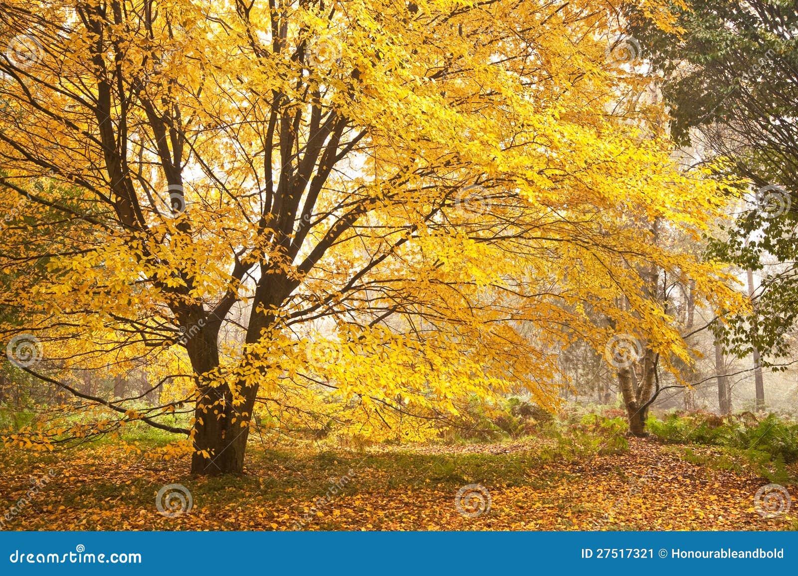 Beautiful Autumn Fall Nature Image Landscape Stock Image