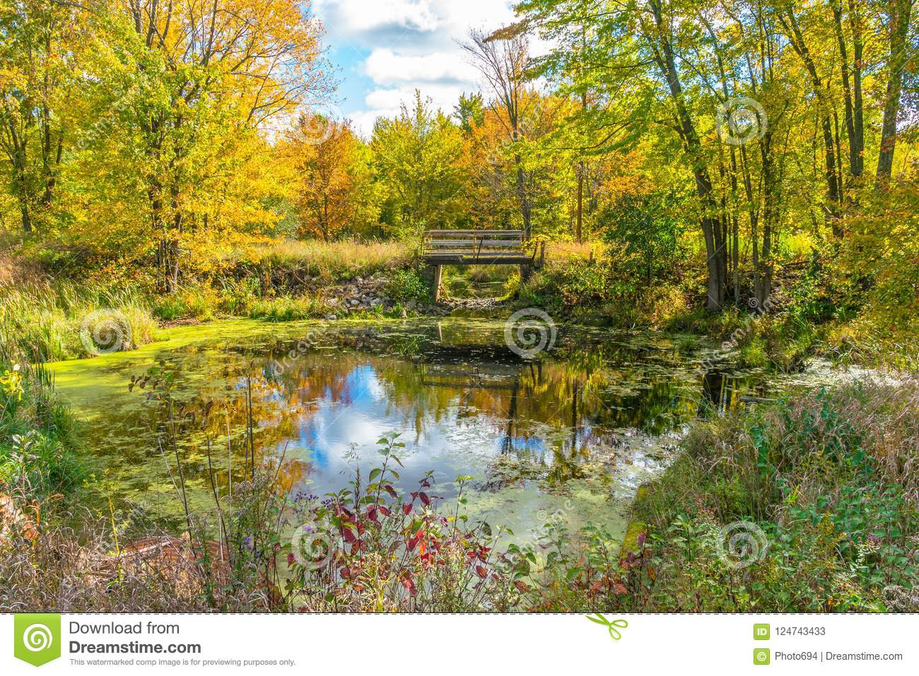 A picturesque autumn forest reflection landscape with footbridge over pond.