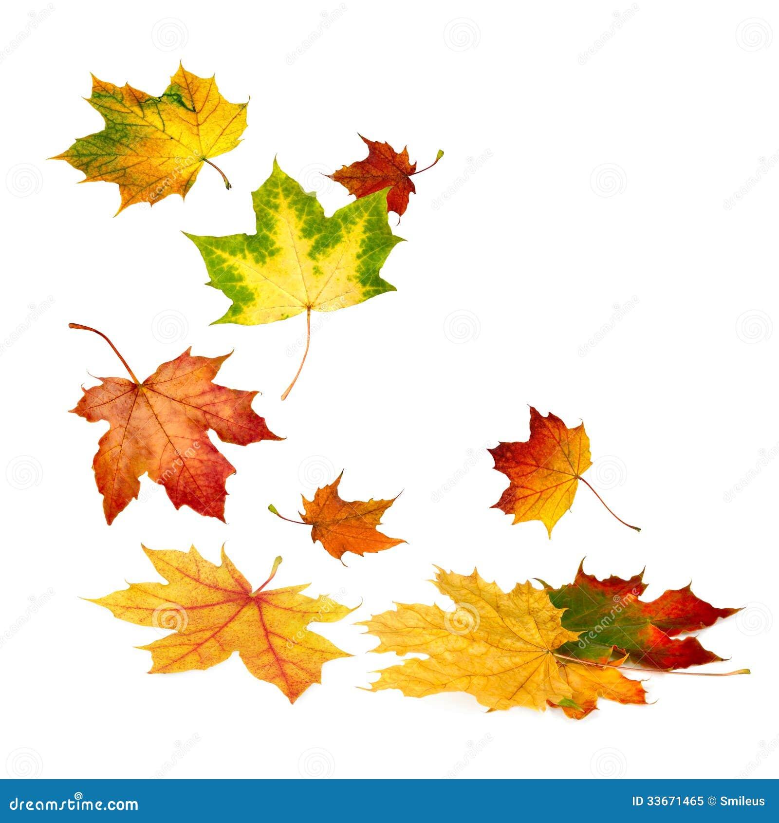 Beautiful autumn leaves falling down