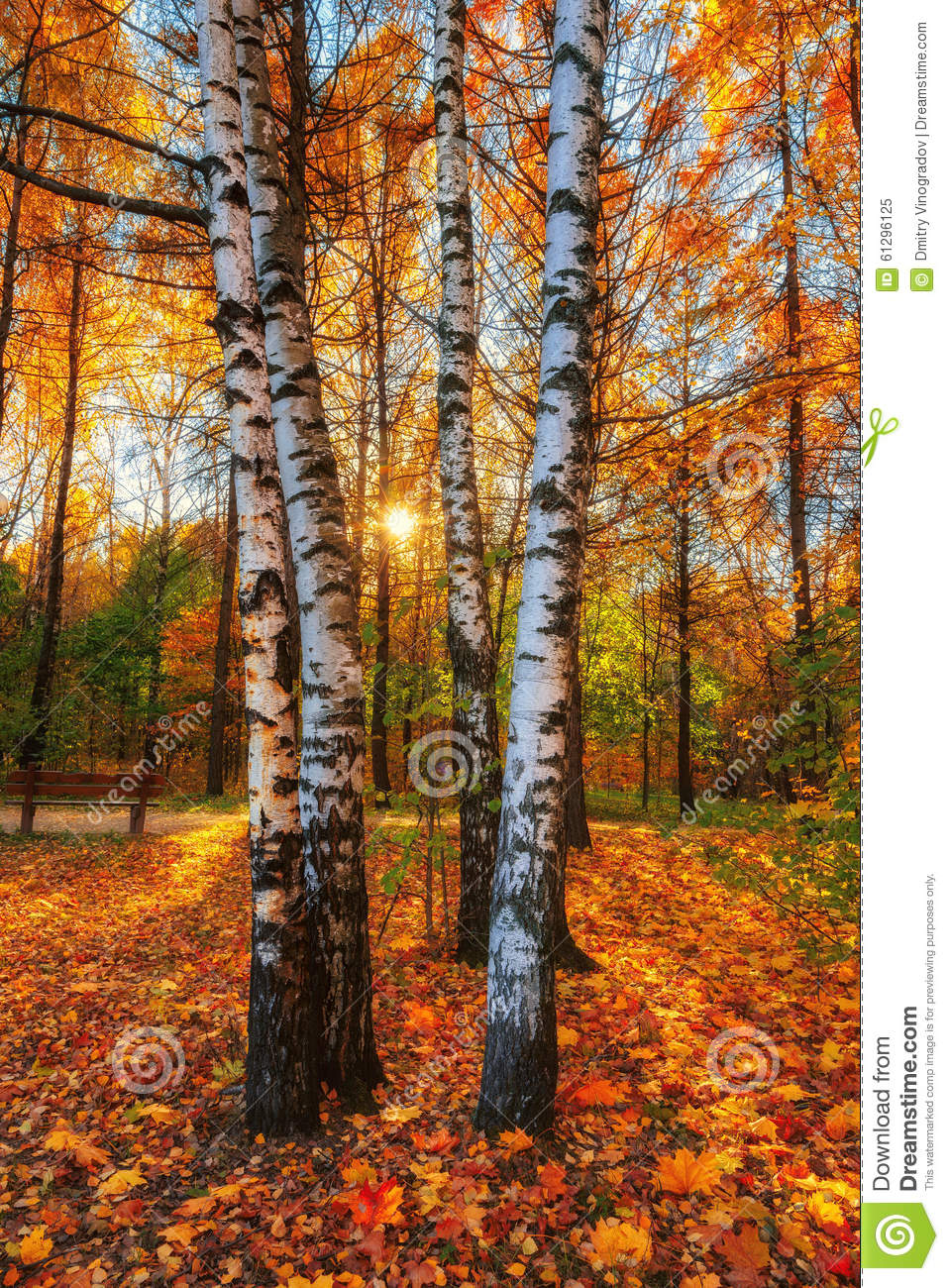 Beautiful Autumn Sunset: Beautiful Autumn Morning In The Park With Soft Golden