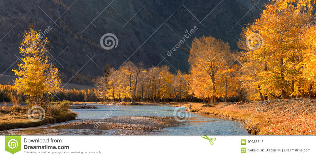 A beautiful autumn mountain landscape with sunlit poplars and blue river.Autumn forest with fallen leaves.