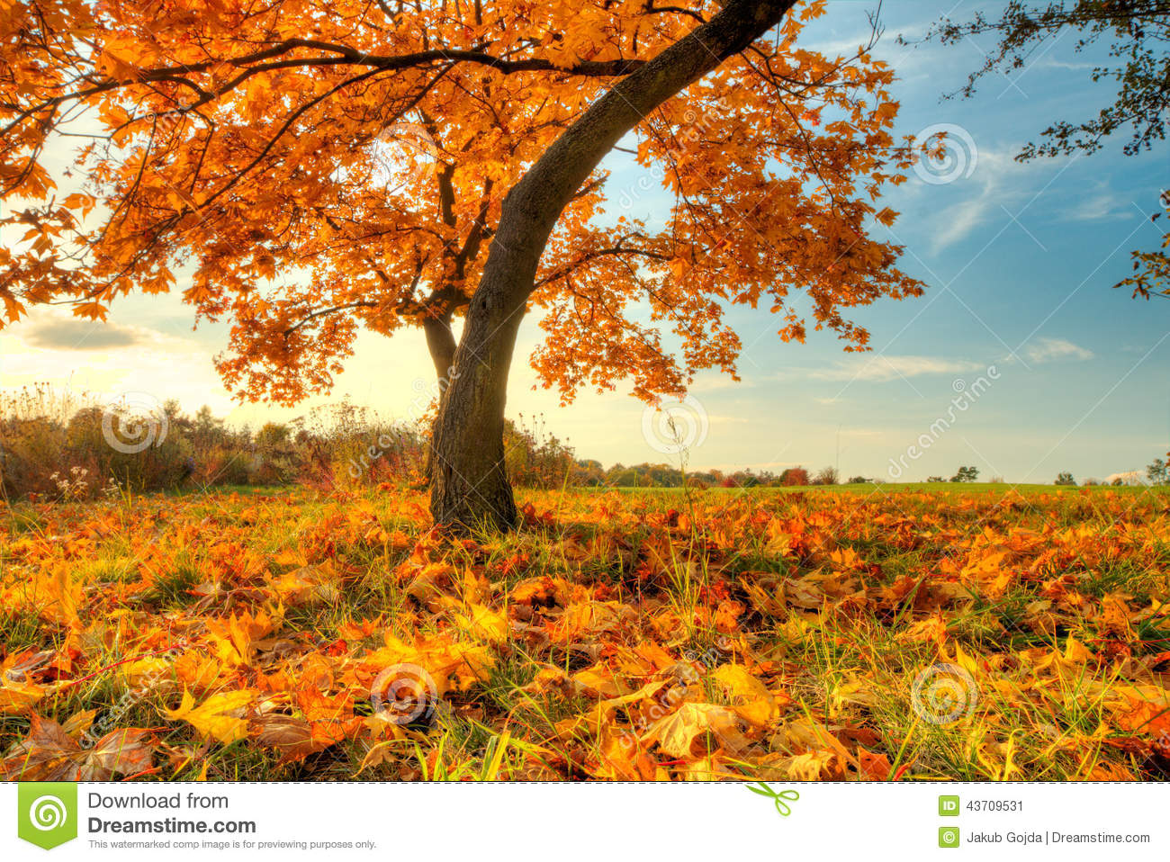 Beautiful Autumn Tree With Fallen Dry Leaves Stock Image ...