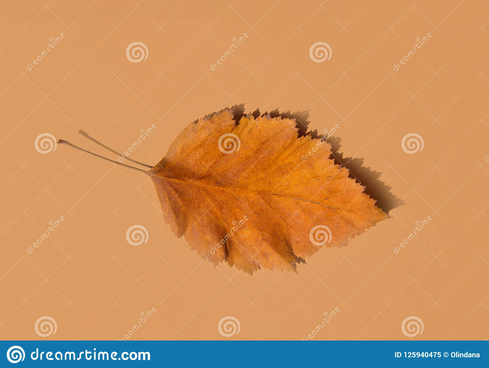 Beautiful Autumnal Background. Dry Orange yellow leaf with foggy edges on beige brown solid background. Thanksgiving