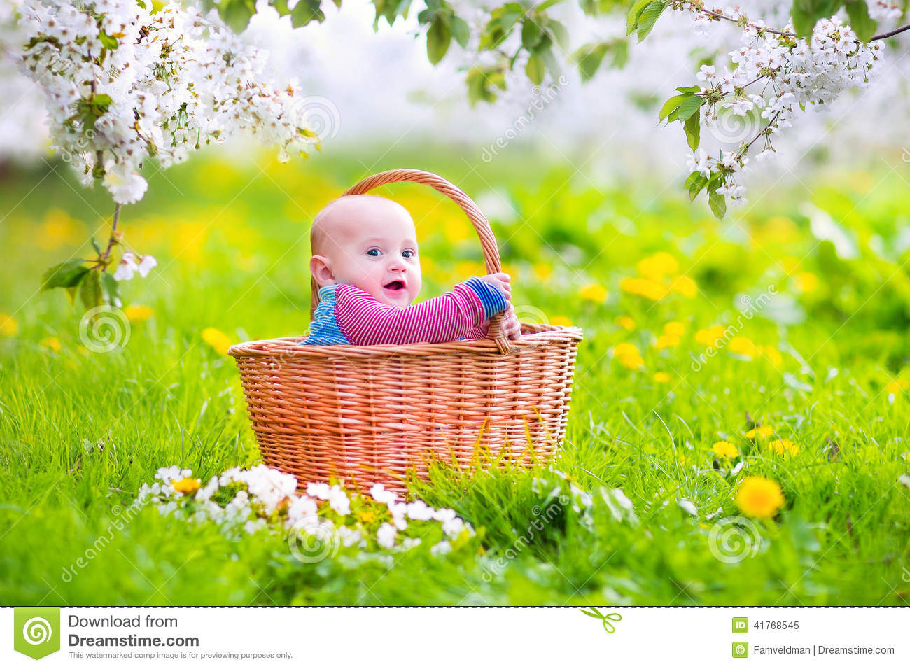 Beautiful Baby In A Basket In A Blooming Apple Tree Stock