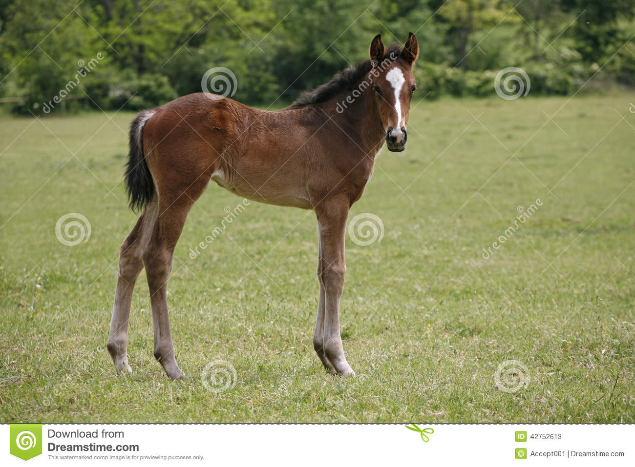 Beautiful Baby Horse In Pasture Stock Image Image Of Head Freedom 42752613