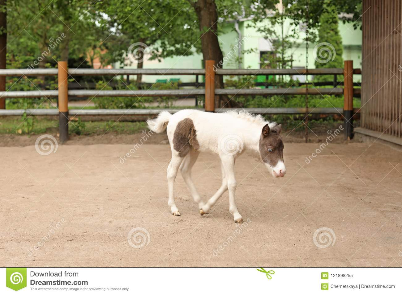 Beautiful Baby Horse In Zoological Garden Stock Image Image Of Garden Background 121898255