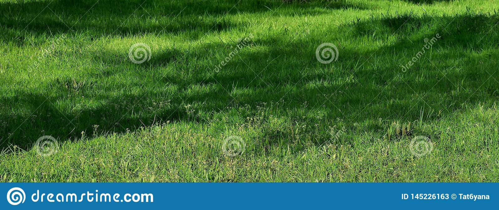Beautiful background with bright green grass on the lawn