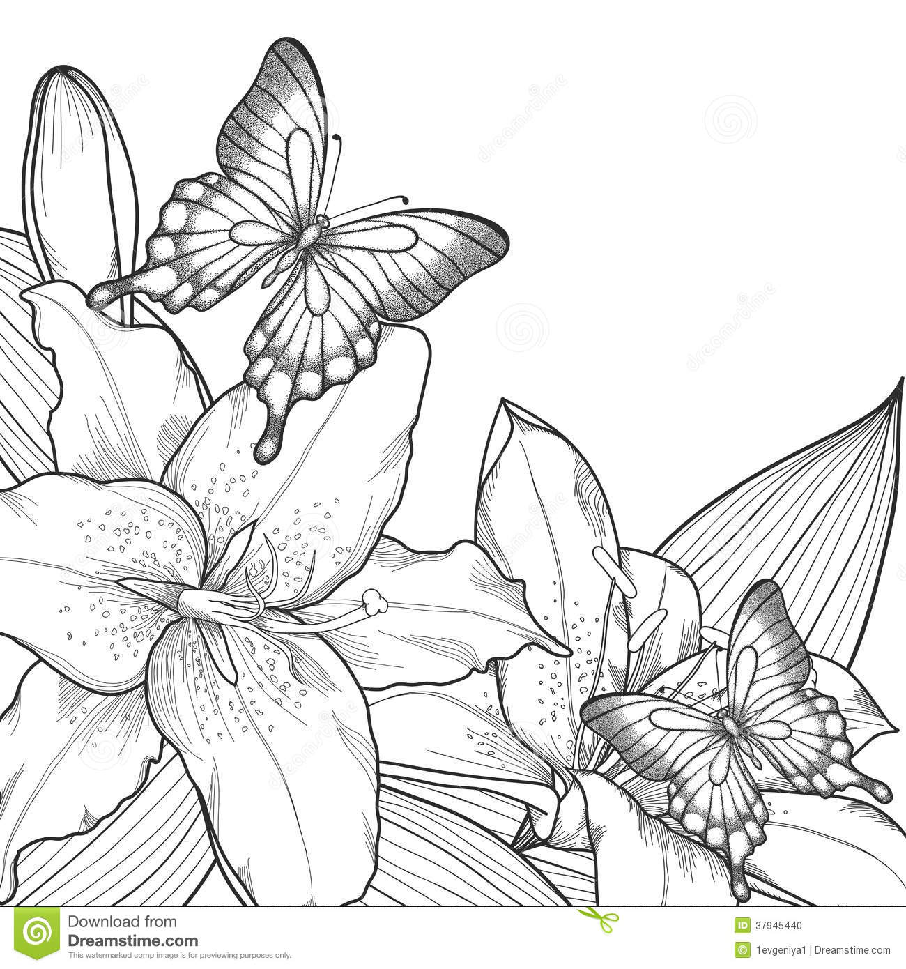 Contour Line Drawing Butterfly : Beautiful background for greeting card with monochrome