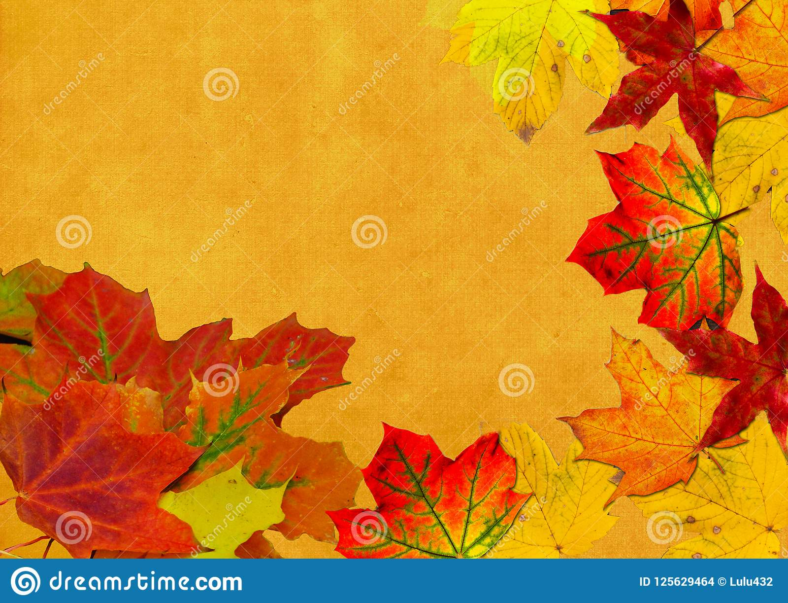 Beautiful background with leaves