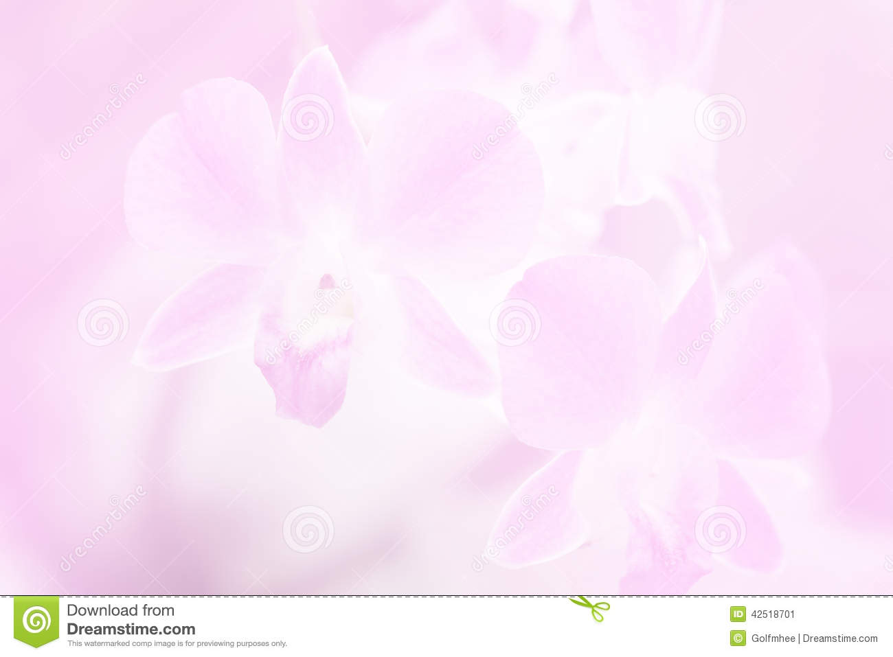 Flower Arrangement Pictures With Theme Beautiful Background With Orchid Flower In Pink Color