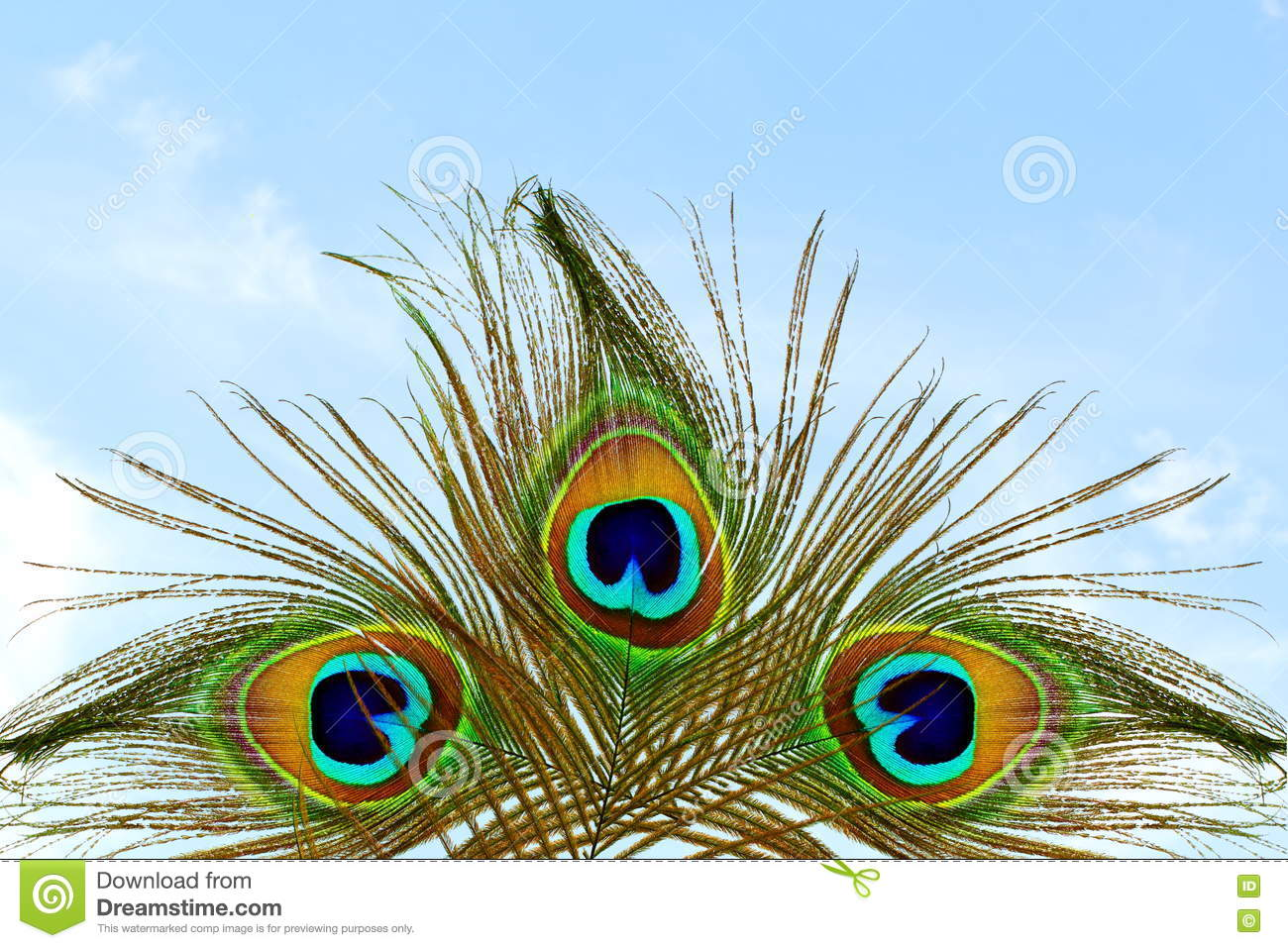 Beautiful background with peacock feather in sky background stock photo image of green beauty - Beautiful peacock feather ...