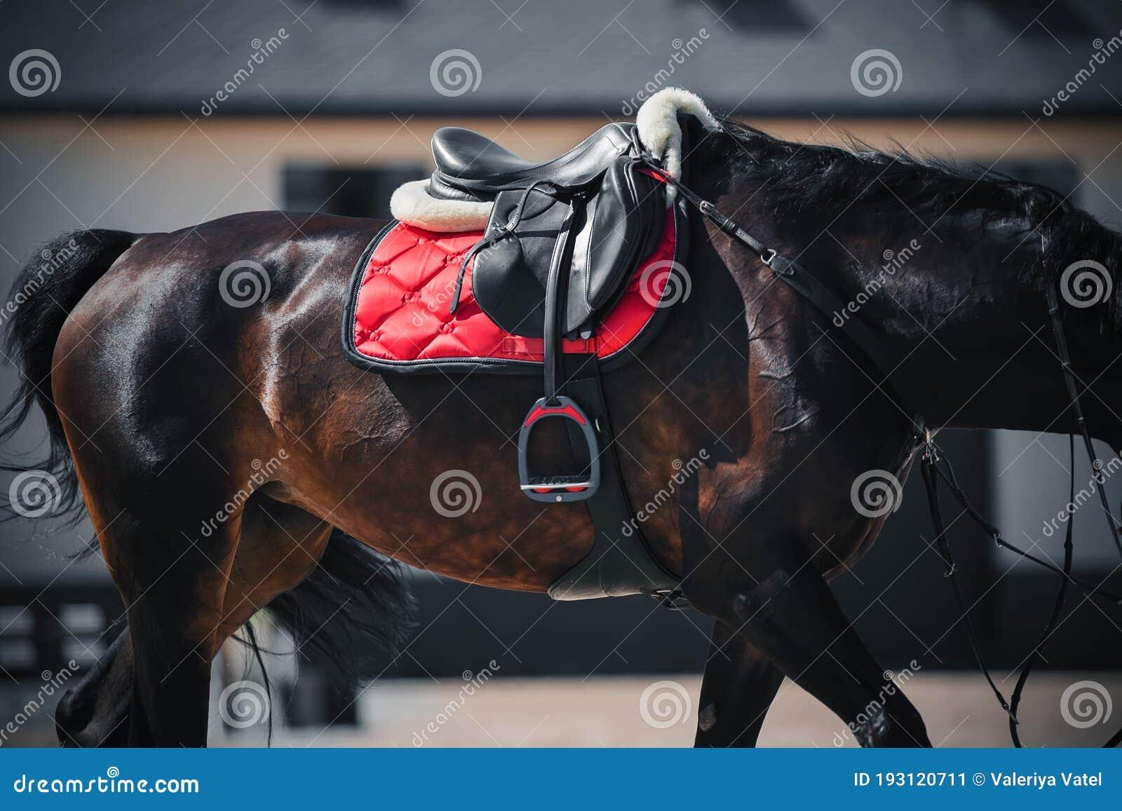 3 999 Saddle Stirrup Photos Free Royalty Free Stock Photos From Dreamstime