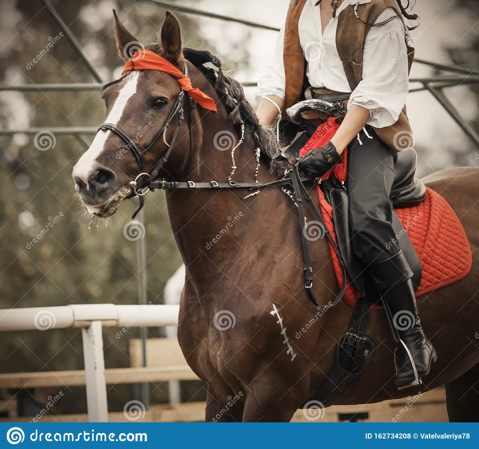 A Bay Horse Gallops With A Rider In The Saddle Who Is Dressed In Pirate Costume Stock Photo Image Of Competition Head 162734208