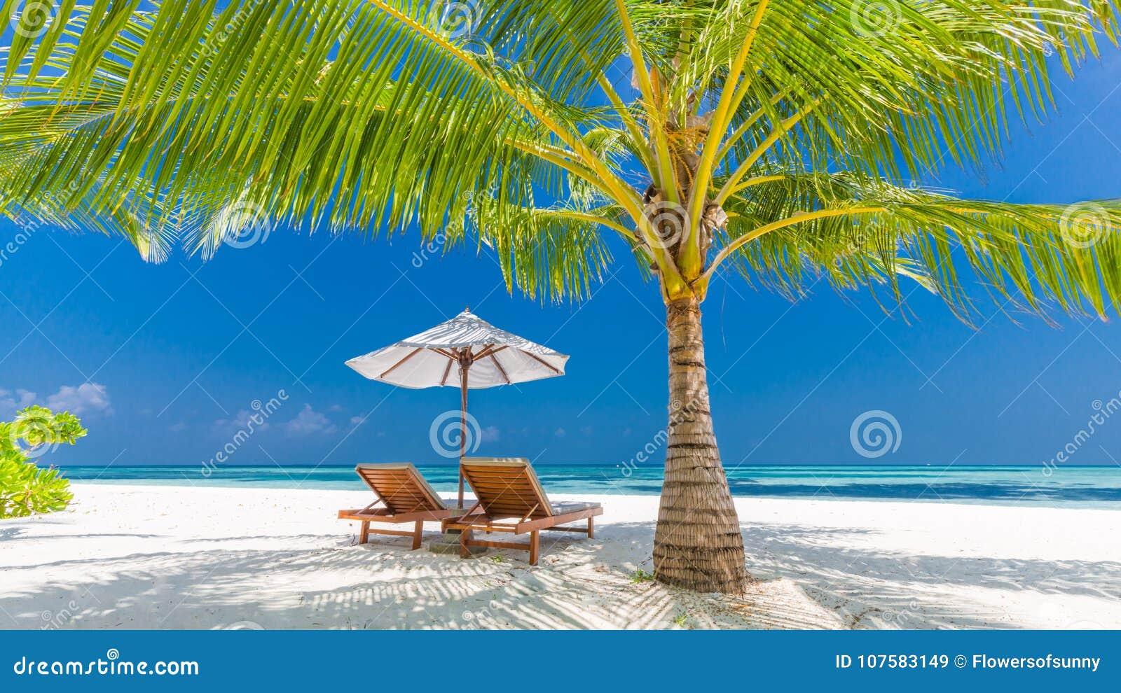 Beautiful Beach Banner Tropical Nature Scene Palm Trees
